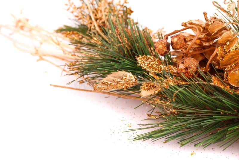 Christmas tree branch stock photos