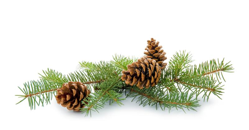 Christmas tree branch with cones royalty free stock images