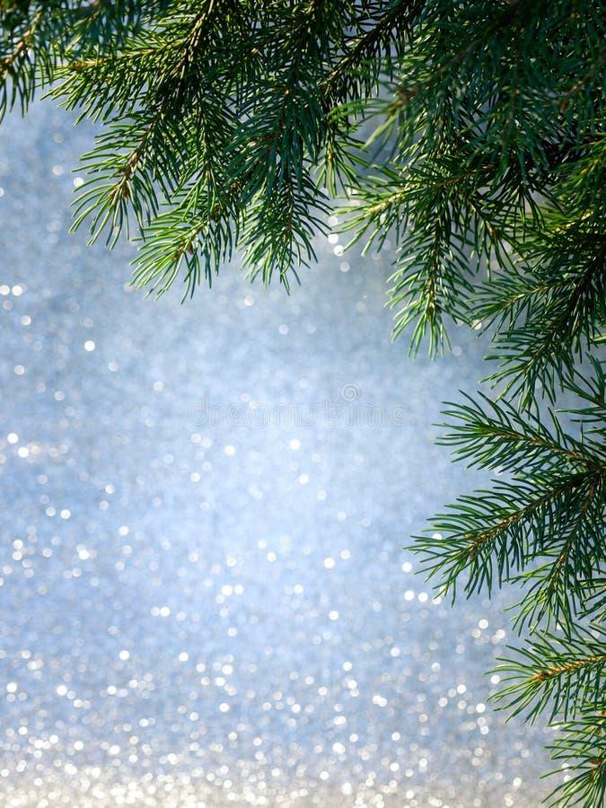 Christmas Tree Branch royalty free stock photos