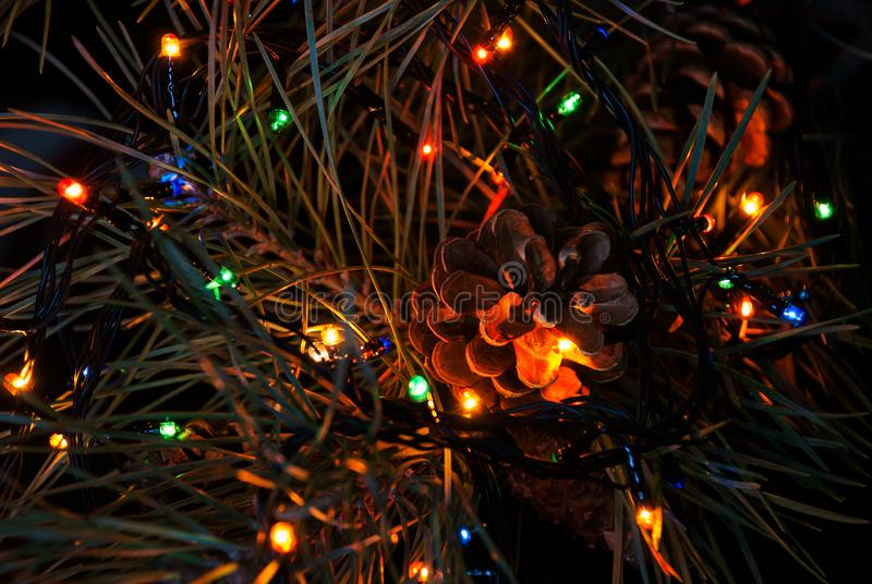 Christmas tree branch and lights.  stock photos
