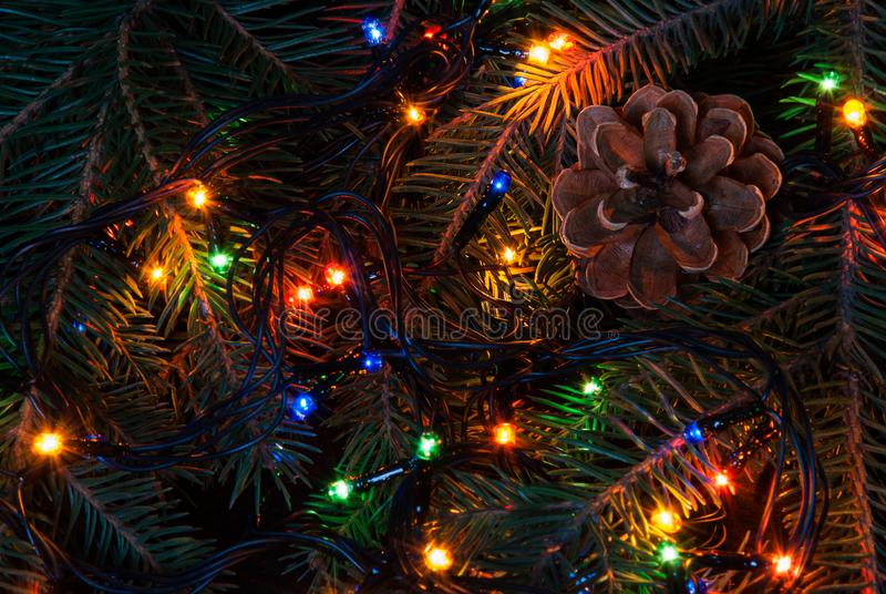 Christmas tree branch and lights.  royalty free stock image