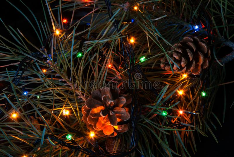 Christmas tree branch and lights.  stock photography