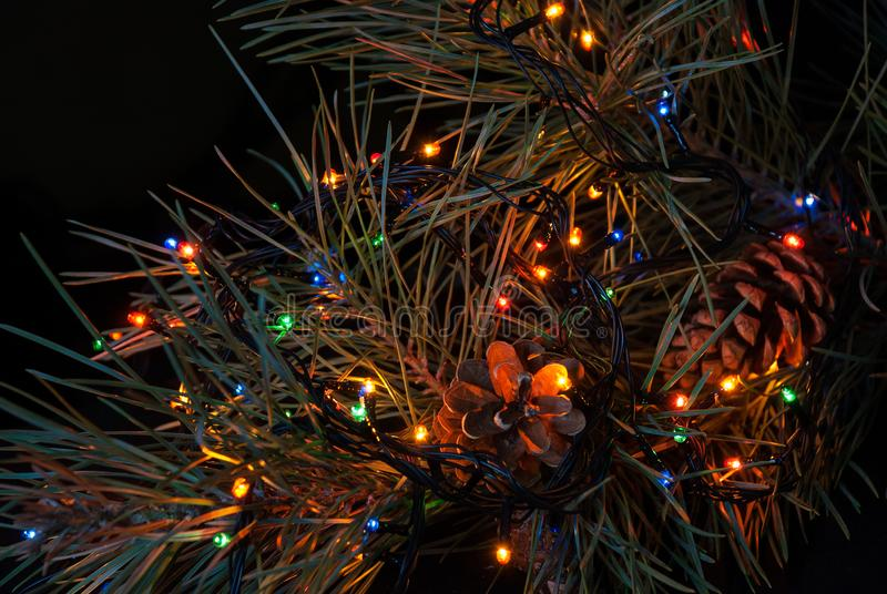 Christmas tree branch and lights.  stock image