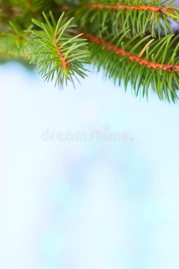 Christmas tree branch frame, blue bokeh background. Christmas tree branch postcard frame, blue and turquoise bokeh texture background copy space stock photography