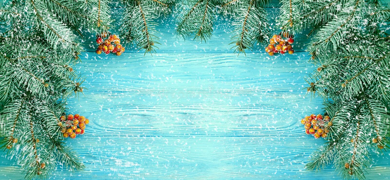Christmas tree winter branch wintery greeting decorative season on blue wooden background, snow stock photo
