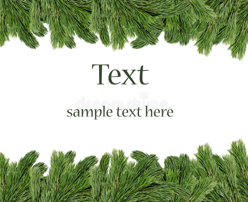 Christmas tree branches border. Over white background (with sample text stock image