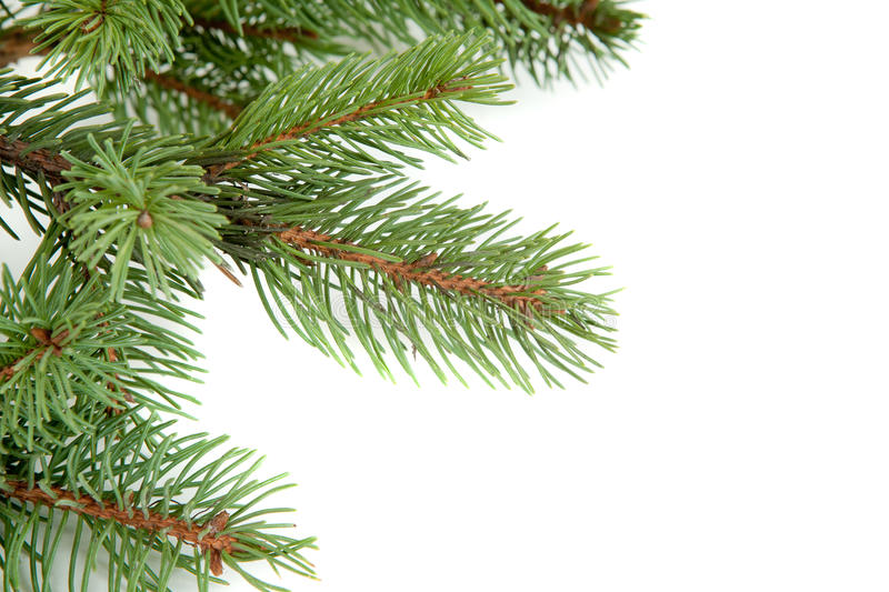 Christmas Tree Branches Border Over White Stock Photo - Image of conifer, snow: 17471912