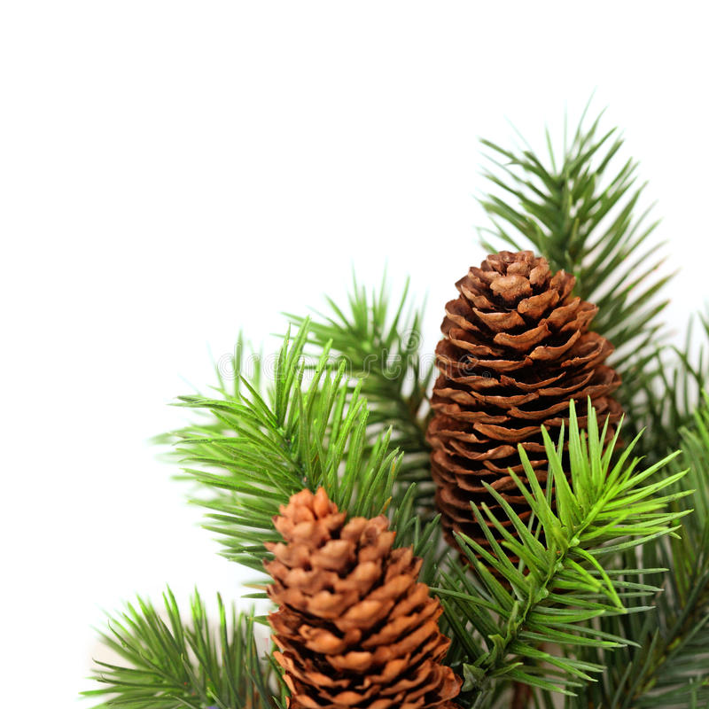 Christmas Tree Branches Stock Image Image Of Twig Spruce