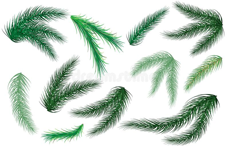 Christmas tree branches. Set of tree, fir, pine. Isolated on a white background. Vector. Illustration stock illustration