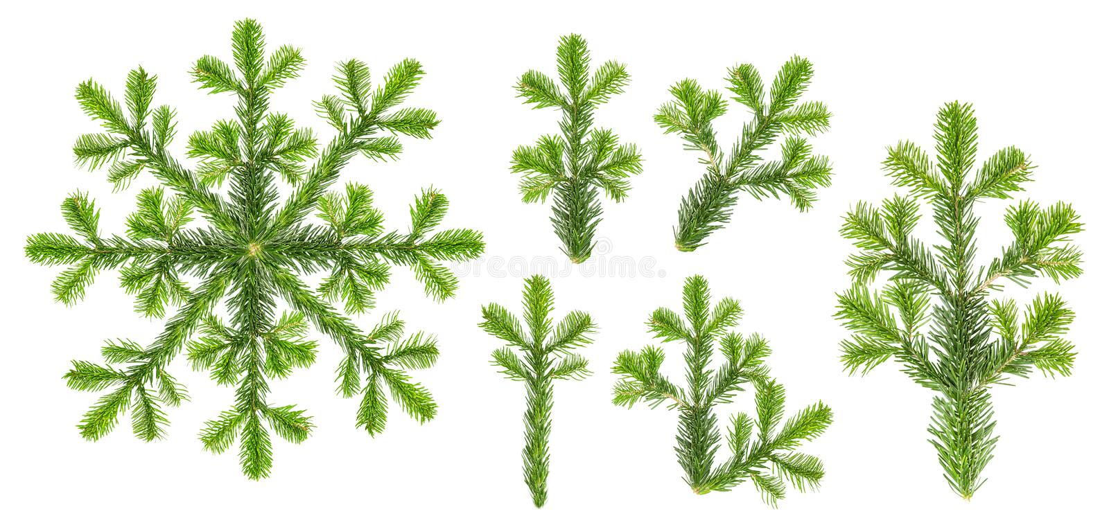 Christmas tree branches Spruce twigs isolated white background s stock photo