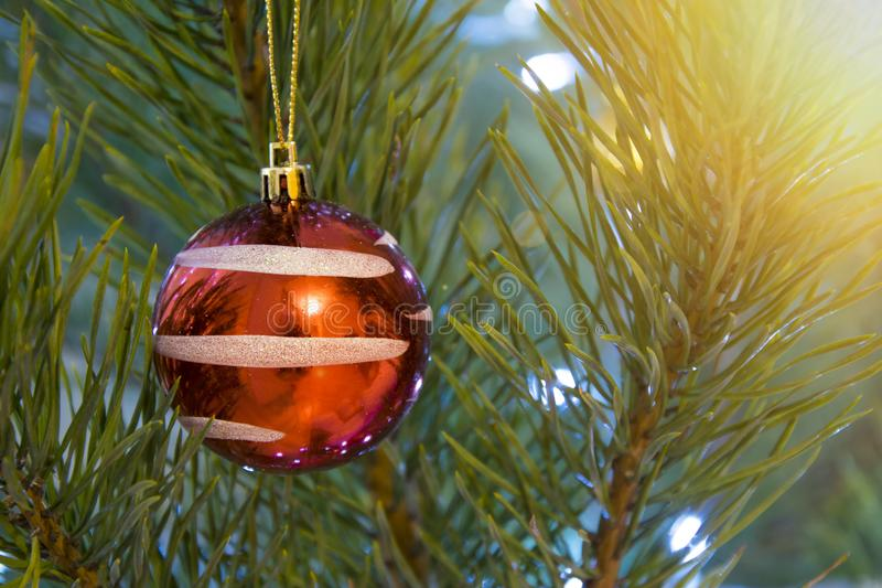 Christmas tree closeup background. Red ball hanging on decorated for holidays pine stock images