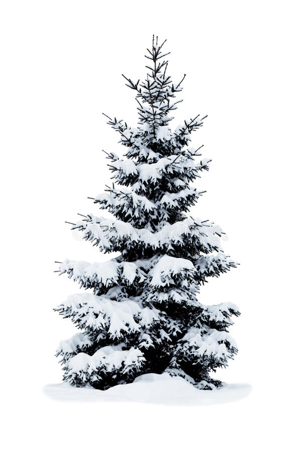 Download Christmas Tree Covered With Snow. Stock Photo - Image: 27808750