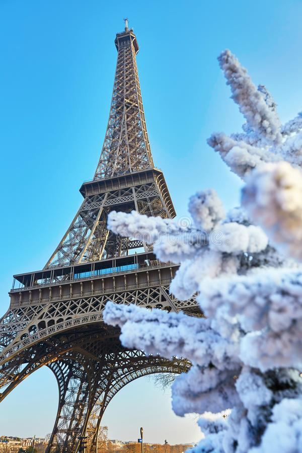 Christmas tree covered with snow near the Eiffel tower in Paris stock photo