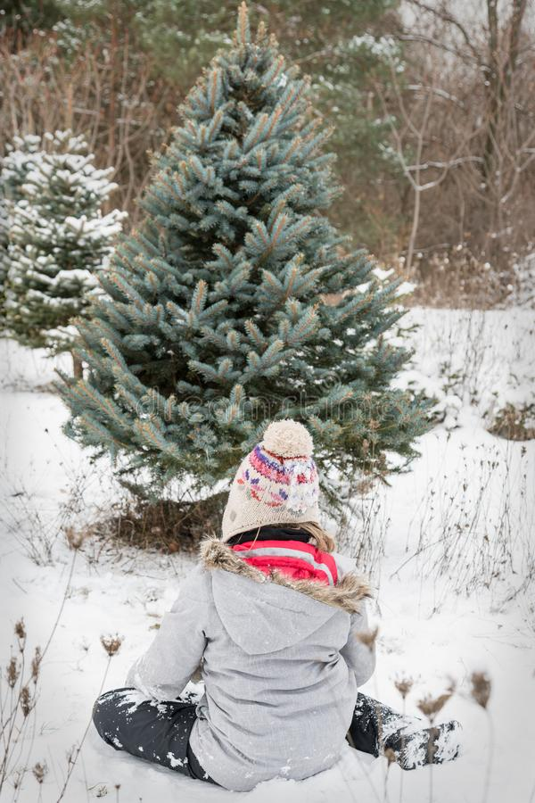 Free Christmas Tree Cutting Royalty Free Stock Images - 105189049