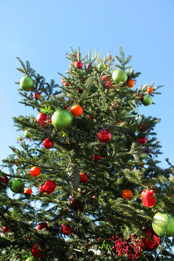 Christmas tree in day light, angle of elevation with blue sky stock images
