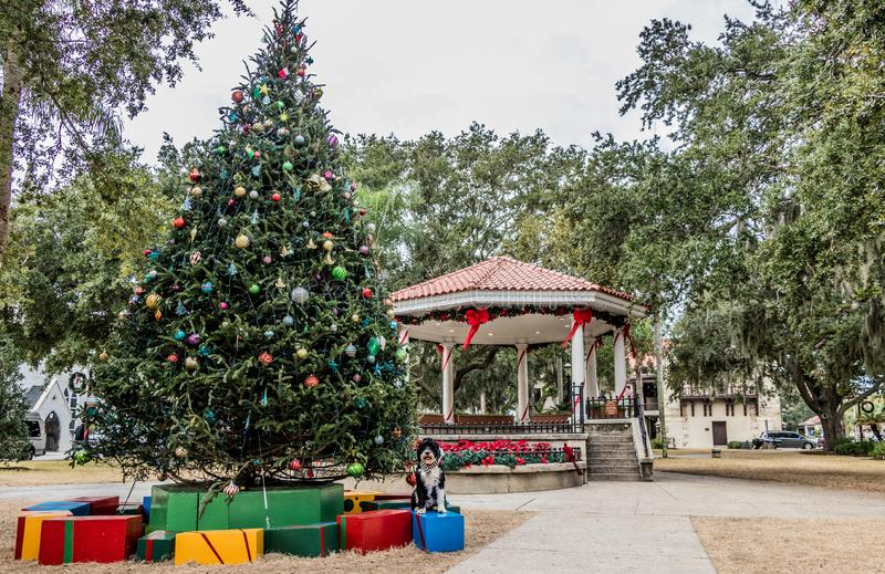 Christmas tree and a dog at the St Augustine Christmas Tree. A giant Christmas tree with presents and a dog in the town square in St. Augustine, Florida in royalty free stock photography