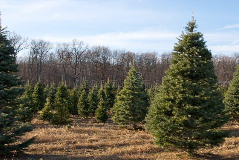 Christmas Tree Farm royalty free stock images