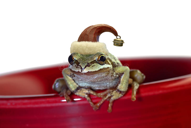 Christmas Tree Frog Sitting on Red Mug. Christmas Tree Chorus Frog with Red Hat Sitting on Red Mug stock images