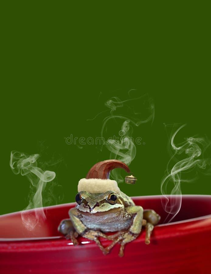 Christmas Tree Frog Sitting on Red Mug 2. ChristmasTree Chorus Frog with Red Hat Sitting on Red Mug 2 royalty free stock images