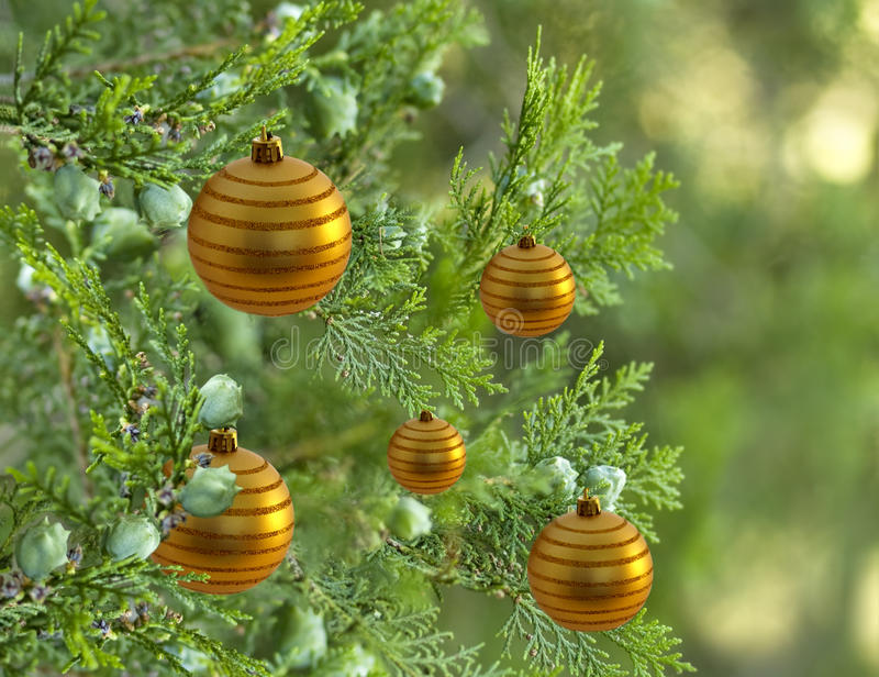Christmas tree with gold bauble balls decorations. Live green christmas tree pine tree decorated with gold bauble balls decorations stock photography