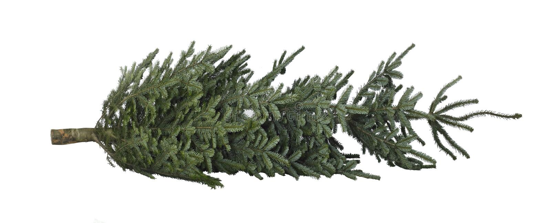 Christmas tree on the ground stock image