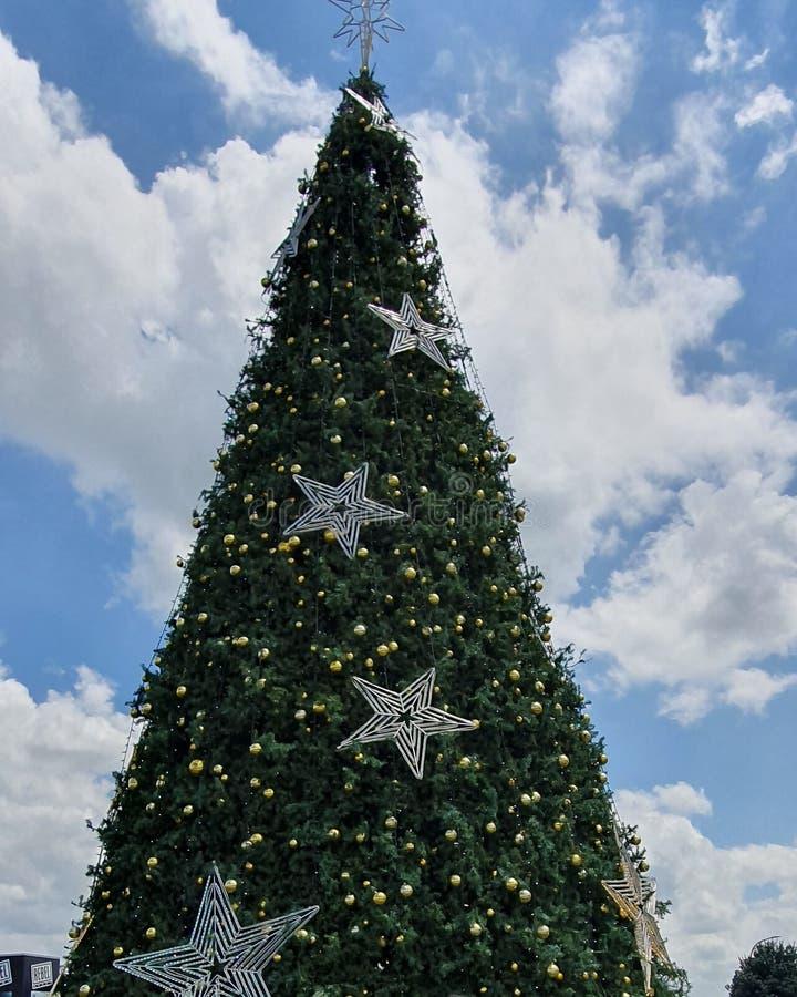 Christmas Tree from Hamilton, New Zealand. Christmas tree from Hamilton royalty free stock photography