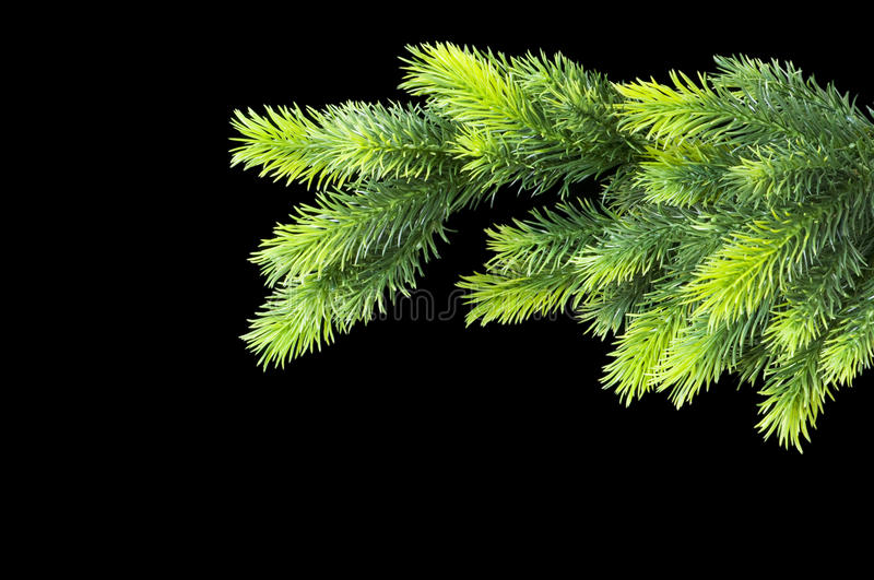Download Christmas tree isolated stock image. Image of larch, isolated - 11215939