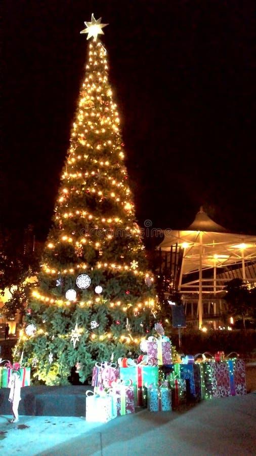 Christmas tree lightning royalty free stock image