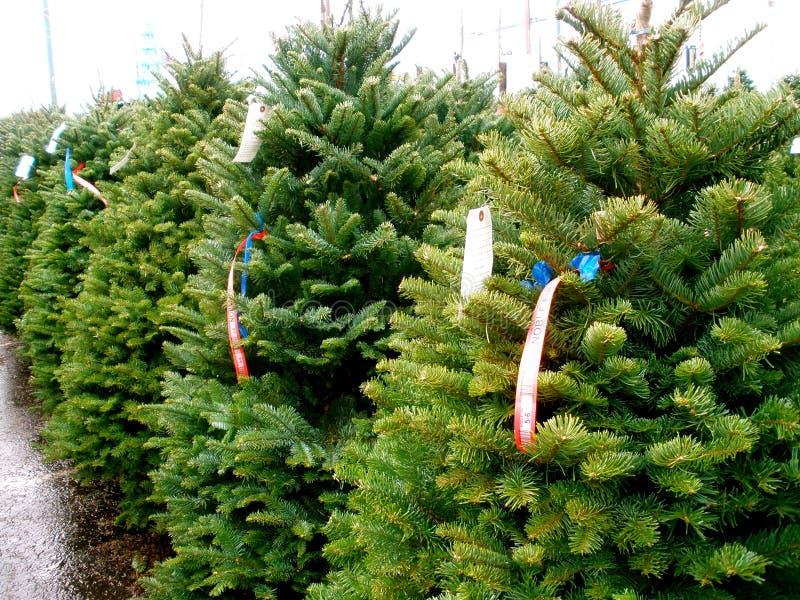 Christmas Tree Lot stock image