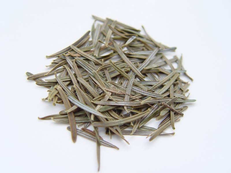 Download Christmas Tree Needles stock image. Image of noel, melissa - 4305