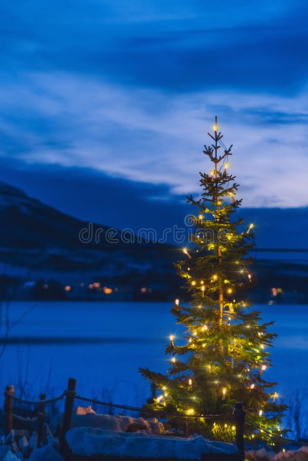 Christmas tree for the new year in the polar night on the background of the mountains in Norway on a farm in Tromso. Outside stock photo