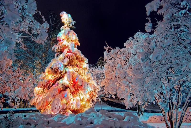 Christmas tree at night royalty free stock photography