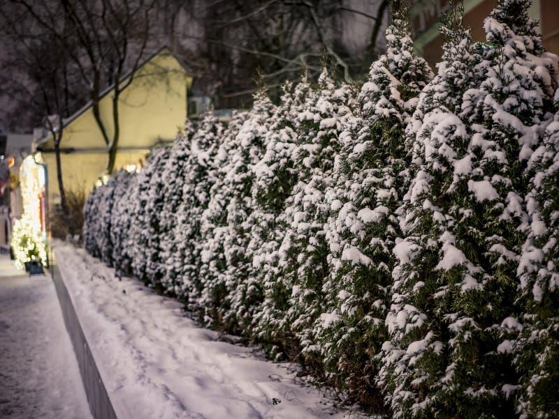 Christmas tree at night snowy weather stock image