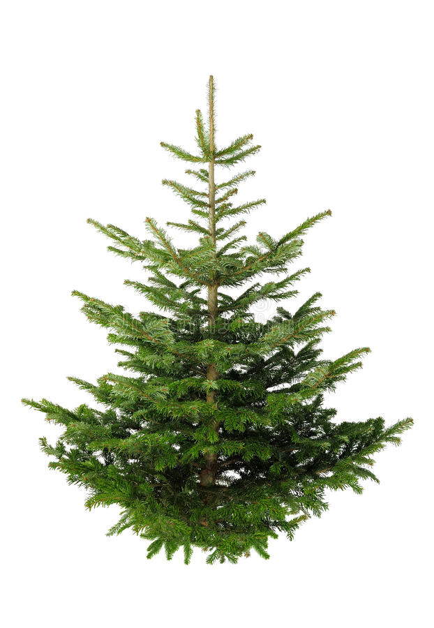 Christmas tree without ornaments stock photos