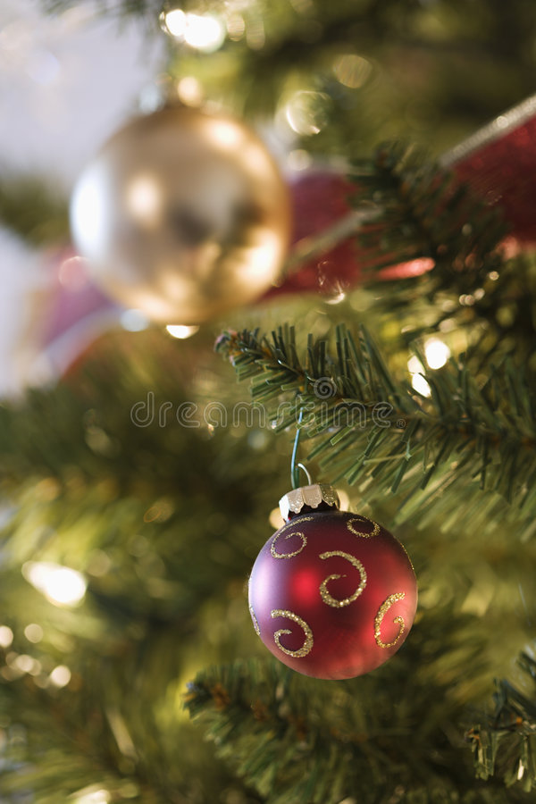 Free Christmas Tree Ornaments. Royalty Free Stock Photography - 2425777