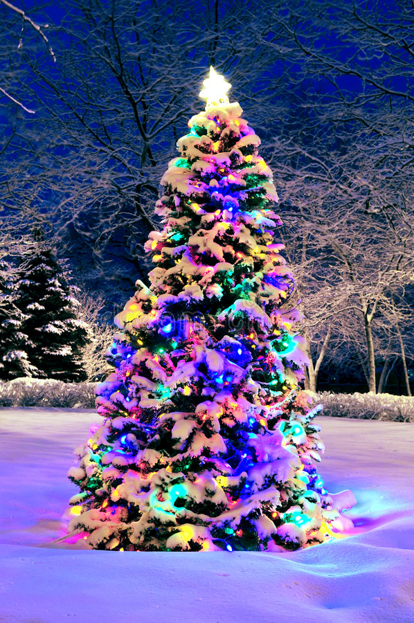 Christmas tree outside stock photos