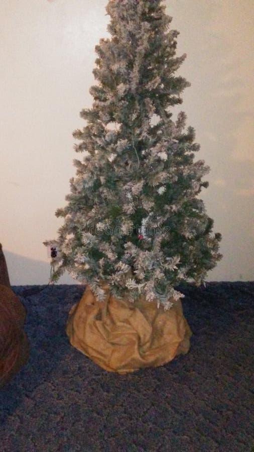 Christmas Tree. Plain, white green stem tree stock photo