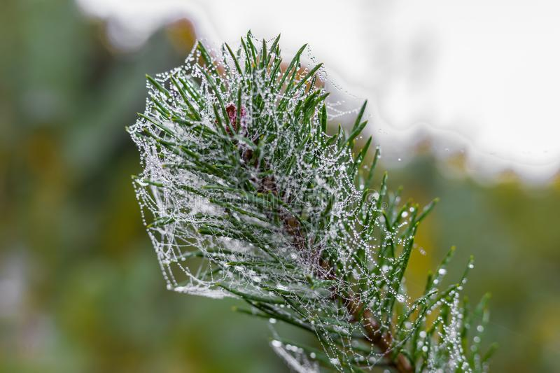 Christmas Tree With Raindrops And Spider Web Can Be Used ...