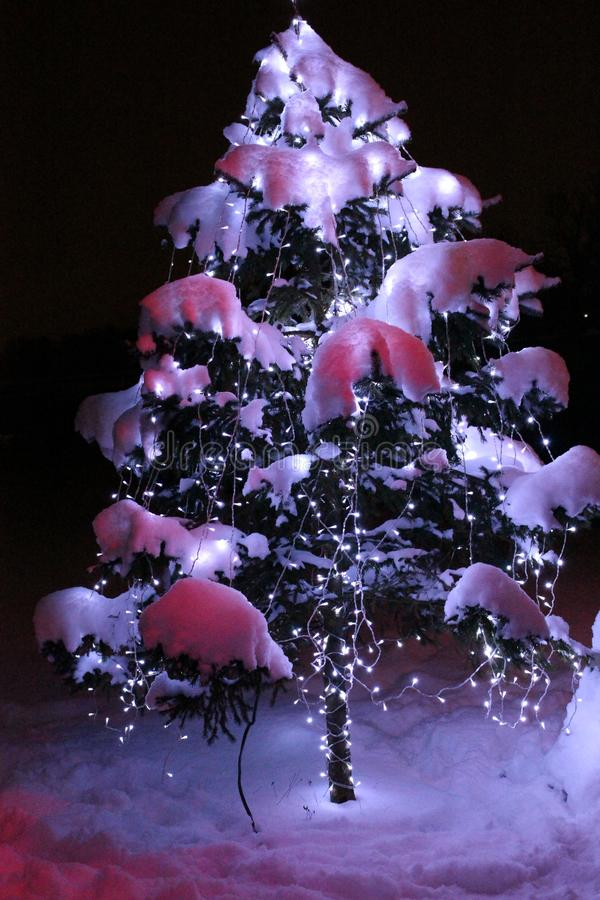Christmas tree with the shining garland under snow. Green Christmas tree as symbol Happy New Year, Merry Christmas Christoff celeb stock photo
