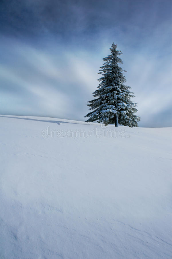 Christmas tree in winter royalty free stock photo