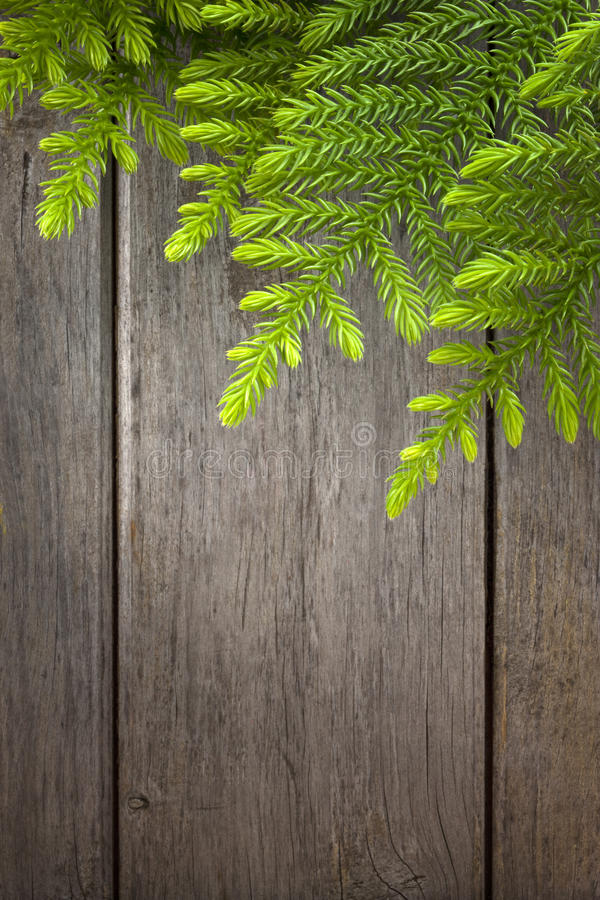 Christmas Tree Wood Background. A Christmas tree branch with a rustic wood background stock photos