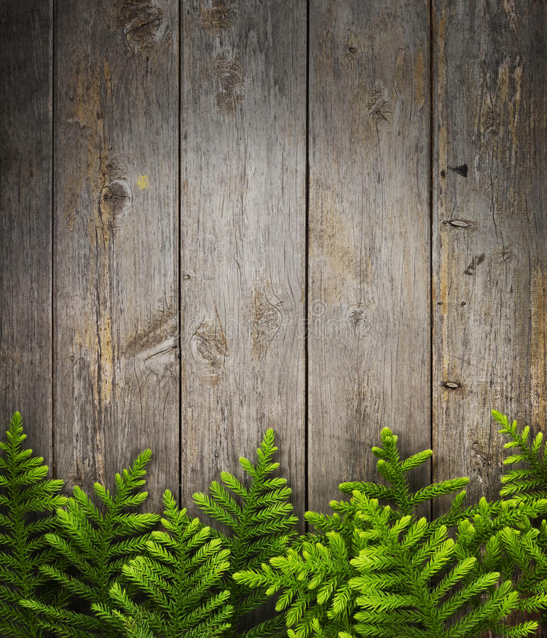 Christmas Tree Wood Background. Pine tree branches with a rustic wood panel background stock photos