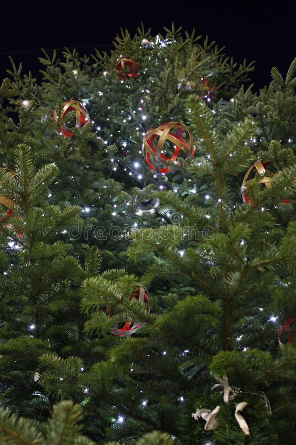 Christmas tree in Zadar Croatia stock photography