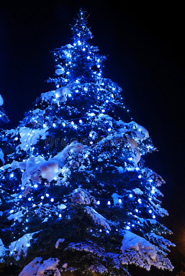 Christmas trees. In public space royalty free stock images