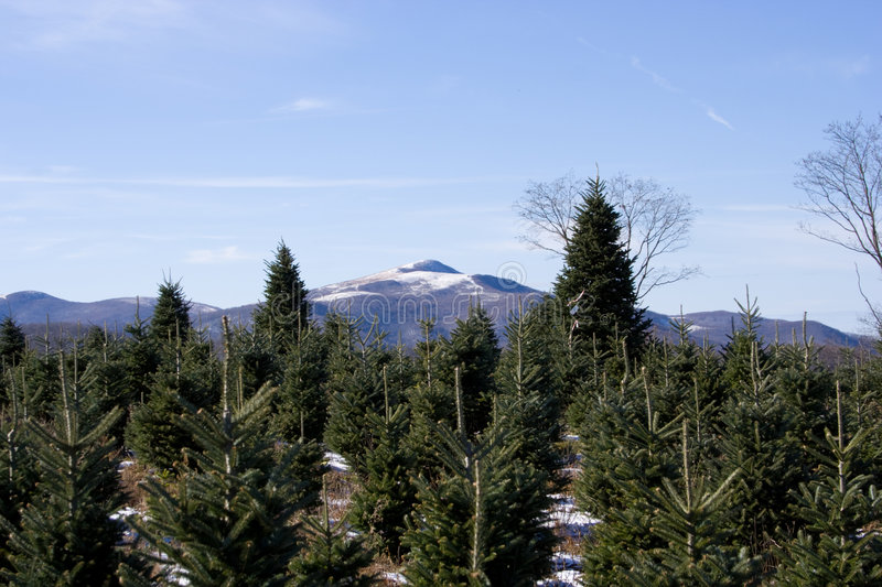 Download Christmas Trees stock image. Image of clear, season, mountains - 7156905
