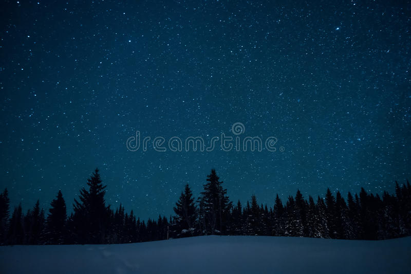 Christmas trees on the background of the starry winter sky. royalty free stock images