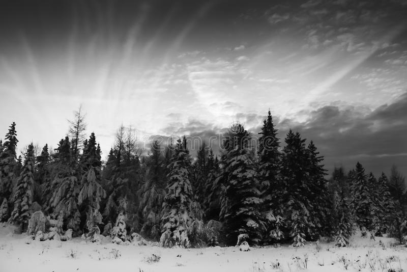 Download Christmas Trees And Cloudscape Stock Photo - Image of quebec, climate: 39506066