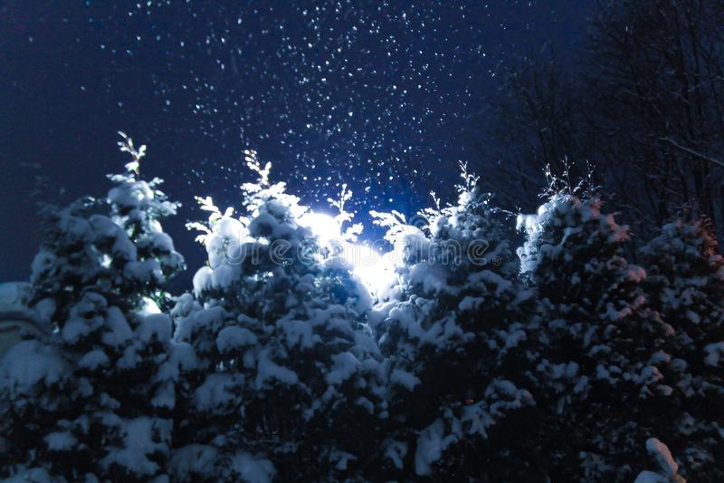 Christmas trees covered with snow at night and illuminated by lanterns during a snowfall. Soft focus. Natural, festive background royalty free stock photography