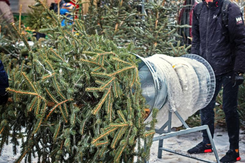 Christmas trees at the farmer`s market for sale during the Christmas season. grid and tunnel for Christmas tree packing stock photos