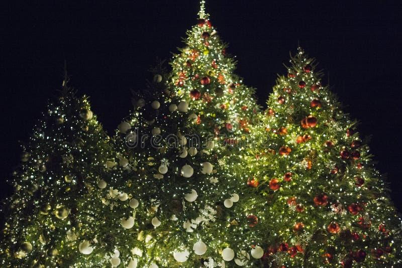 Christmas Trees. Illuminated Christmas Trees at night stock images